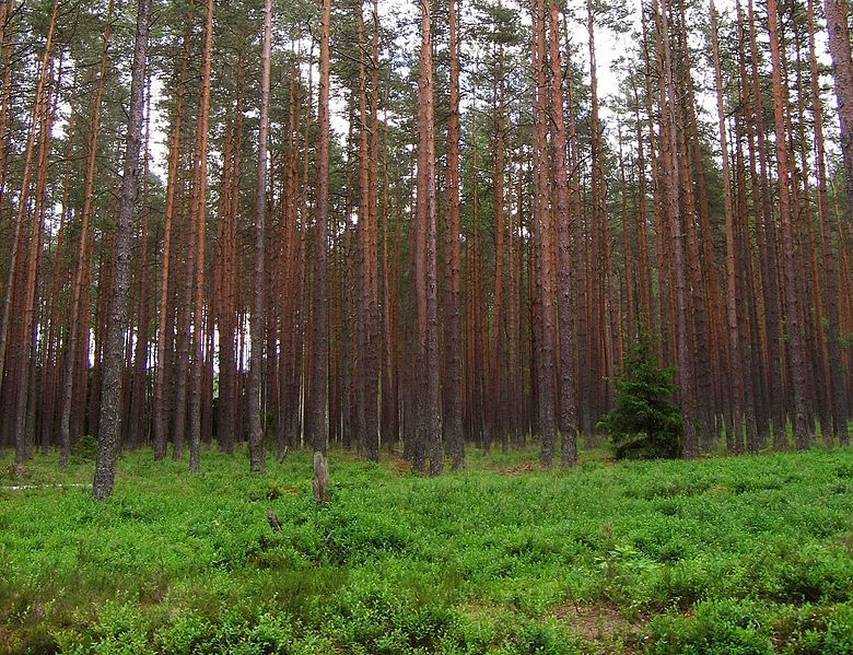 ����� ������ ������� ��������� 2016 Temperate-evergreen-