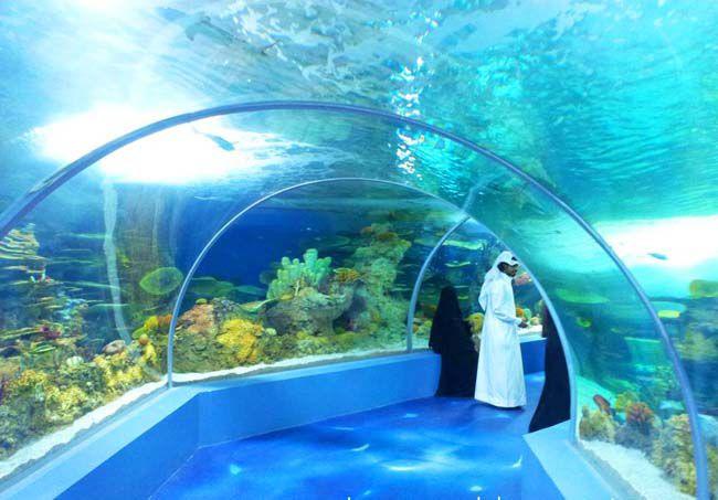 حوض السمك في جدة