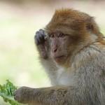قائمة الحيوانات الكالشة