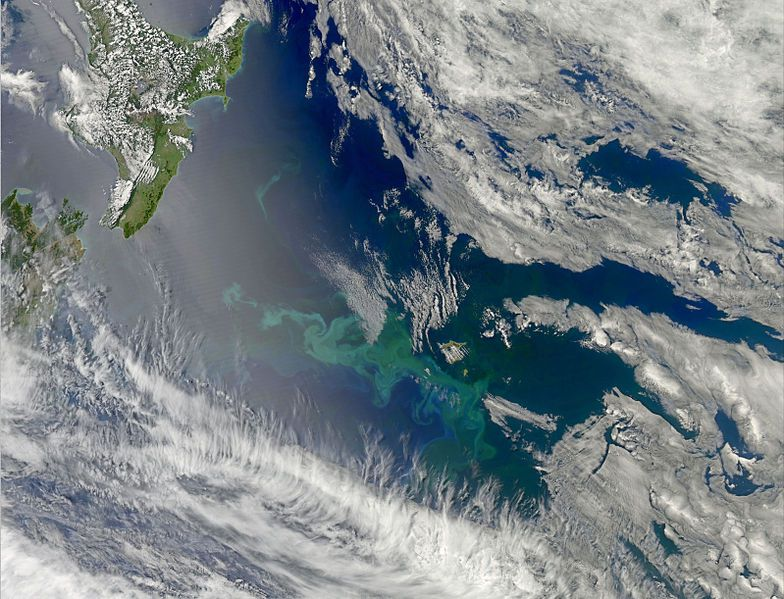 the Chatham Islands