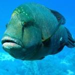 أفضل أنواع أسماك البحر الأحمر