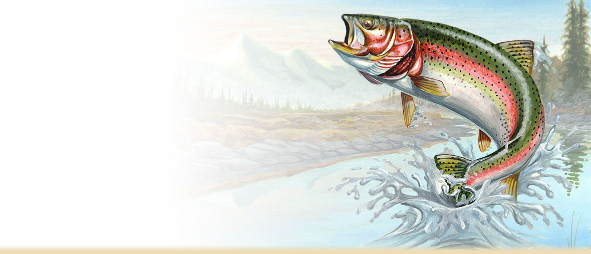 rainbow trout age