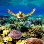 الحاجز المرجاني العظيم في استراليا بالصور