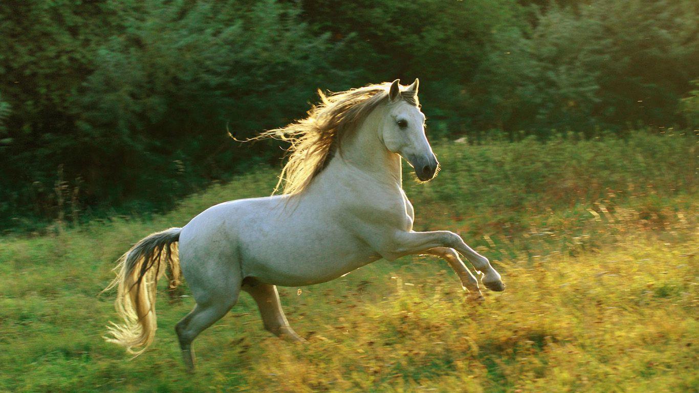 Horses originally