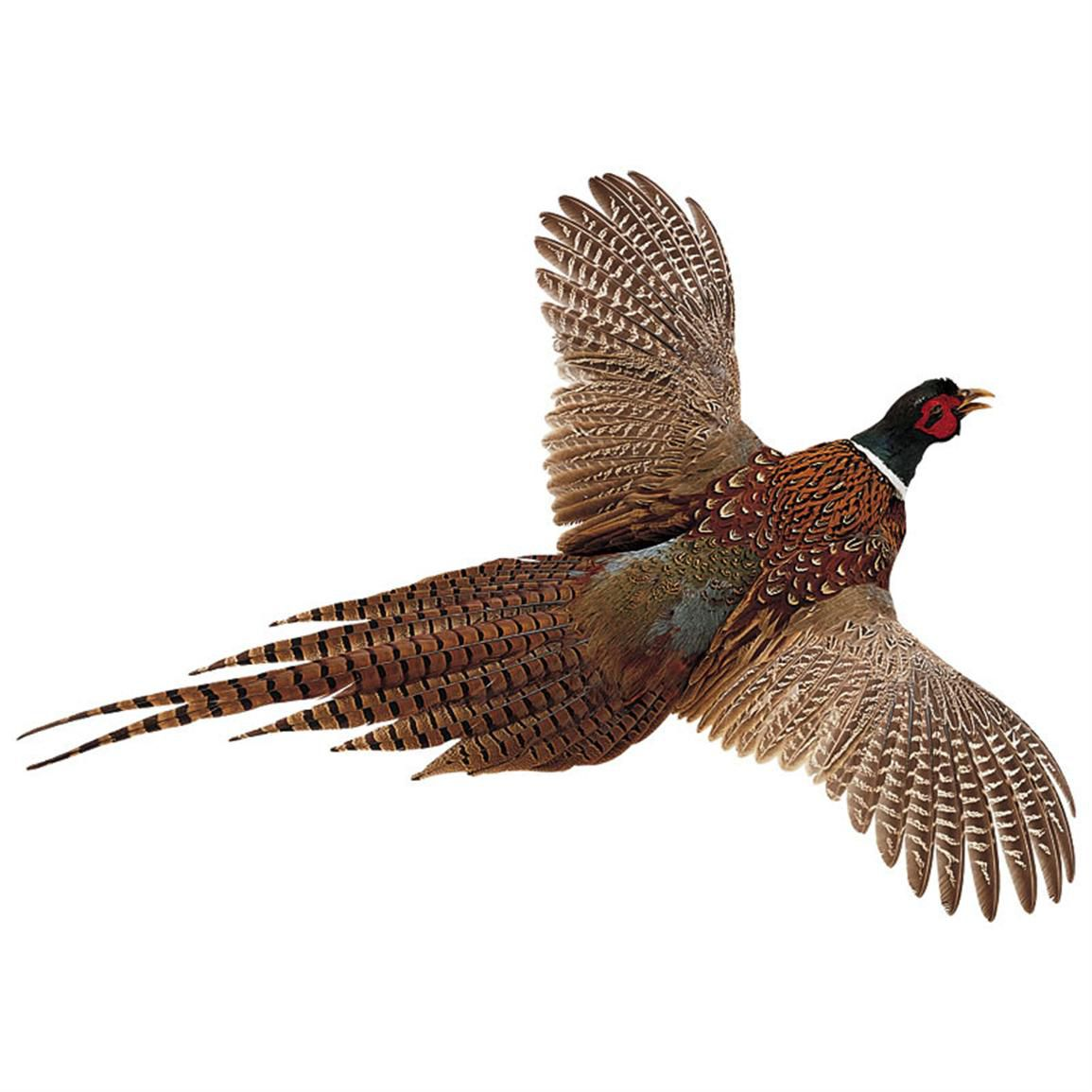 Pheasants can run at the speed of 8 to 10 miles per hour and fly at the speed of 35 to 45 miles per hour. Pheasants are also able to swim.