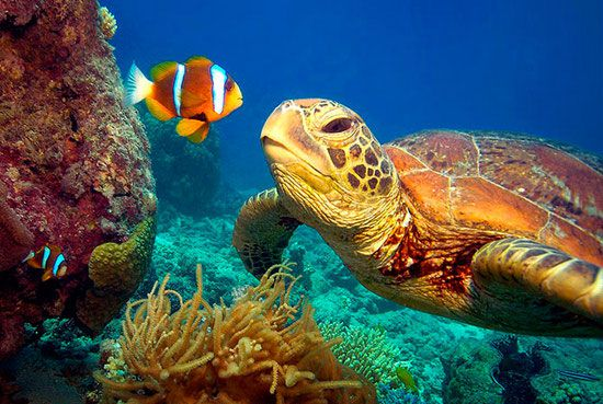 kids turtle and clownfish in The Great Barrier Reef