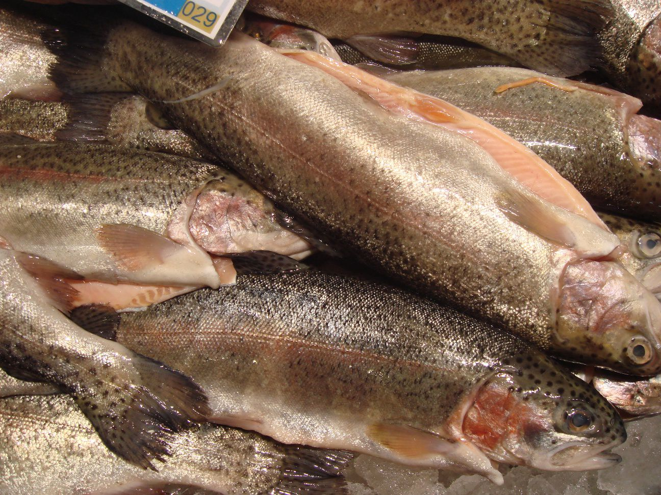 rainbow trout in fish market