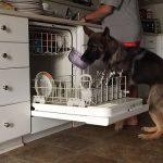 شاهد كلب يساعد صاحبه في أعمال المنزل سبحان الله