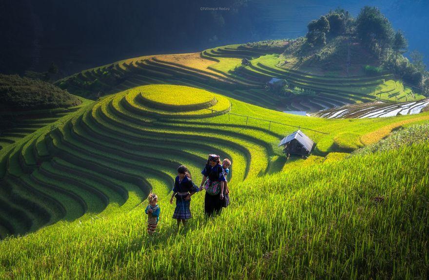 الدول المنتجة للأرز