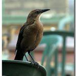 شاهد الطائر المتسول الذي يغضب المارة