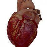 ما هو إنقباض القلب وأسبابه ؟