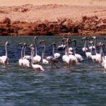 اطلالة سريعة على بحيرات دبي الخلابة