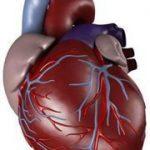 علاج خفقان القلب - 350330