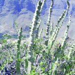 """"""" الضجع ،و الظفرة """" نباتات عمانية تعالج أمراض مزمنة"""