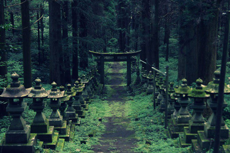 A Forest Shrine in Japan