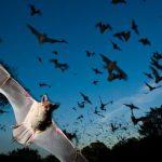 انواع الخفافيش بالصور