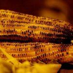 فوائد الذرة الصفراء لمرضى السكري