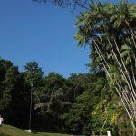 حديقة بينانج النباتية في ماليزيا