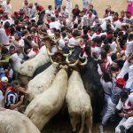 """مهرجان """"سان فيرمين"""" """" San Fermín"""" للثيران في إسبانيا"""