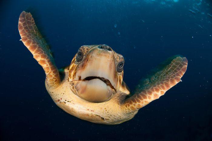 اكل السلاحف Turtles-are-reptiles-with-hard-shells-that-protect-them-from-predators