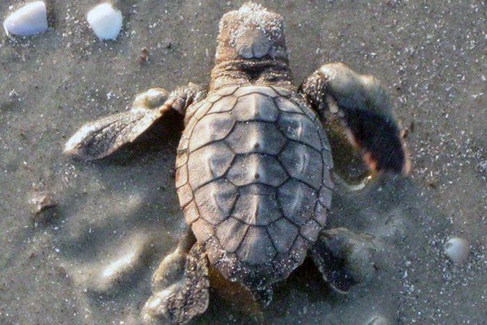 اكل السلاحف Turtles-like-the-humans-who-love-them-are-a-diverse-bunch.-There-are-over-300-species-of-this-ancient-reptile-and-each-one-has-its-own-preferred-diet