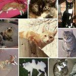 لماذا تختفي القطط في ظروف غامضة في مدينة تيمارو النيوزيلندية ؟