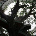 افتتاح ذا جرين بلانيت الغابة الاستوائية المغلقة الأولى في دبي