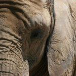 ماهو اقوى الحيوانات ذاكرة ؟