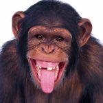 ما اسم صوت القرد
