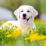 ما اسم صوت الكلب
