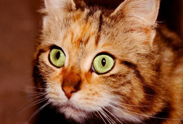 A house cat's bizarre antics may be more than just feline folly. The kitty may be seeing things that human eyes can't.-