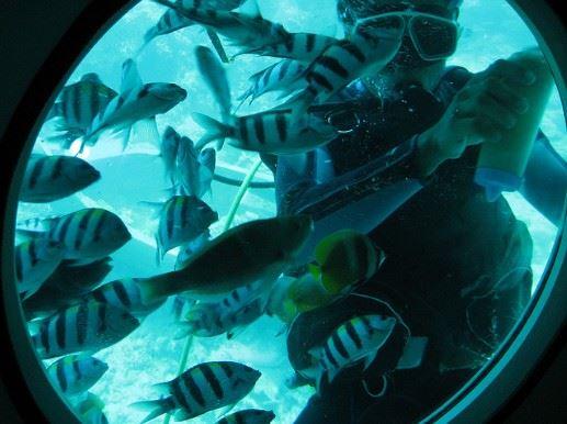 الأسماك من خلال النوافذ المستديرة