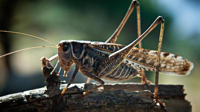 حيوانات المرسال Honey-locust-can-rea
