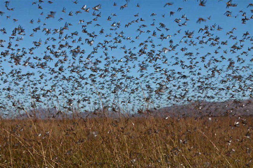 حيوانات المرسال Honey-locust-can-sur
