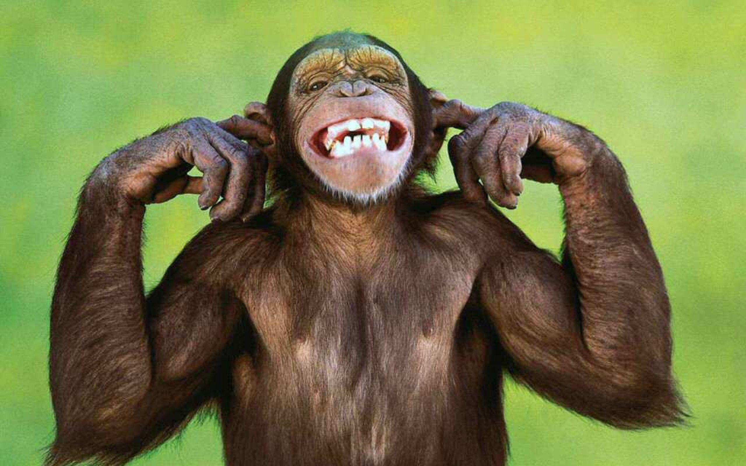 حيوانات المرسال Monkeys-are-very-voc