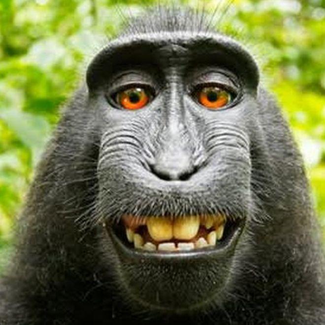 حيوانات المرسال The-Monkey-social-st
