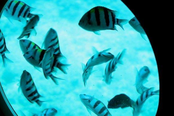 مشاهدة الأسماك من النوافز الدائرية