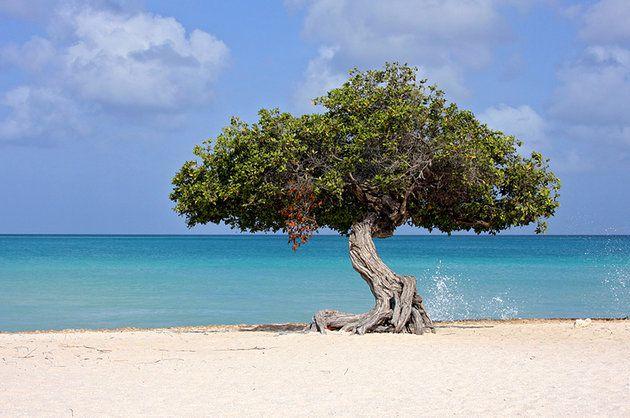 اشهر معالم جزيرة أروبا 1-Beaches.jpg