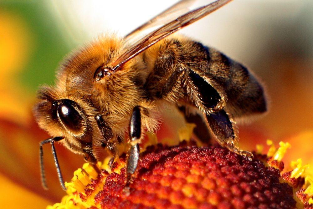 عمر النحل
