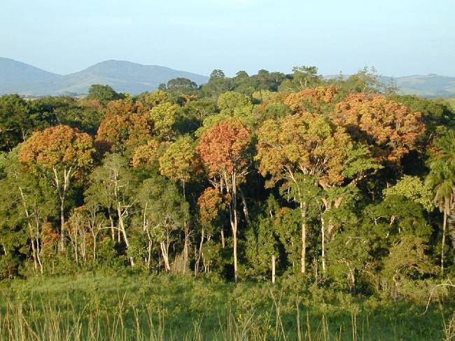 الغابون