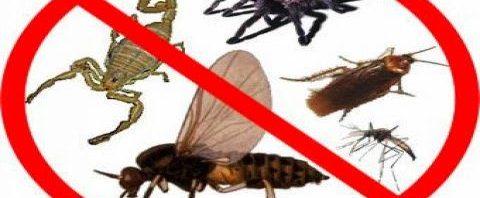 نتيجة بحث الصور عن إبعاد الحشرات المزعجة عن منزلك