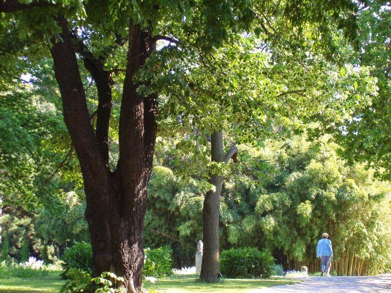 تاريخ الحديقة