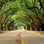 بالصور أجمل الشوارع المغطاة بالأشجار