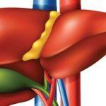 برنامج ازالة السموم من الكبد