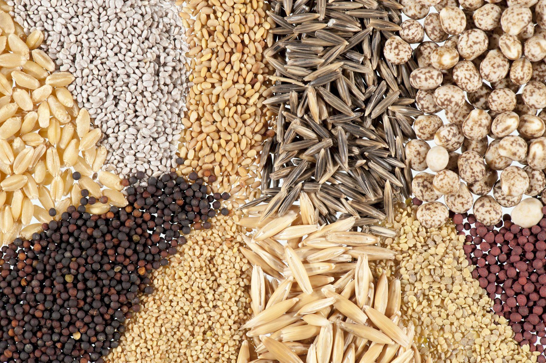 نسبة الفيتامينات المختلفة الموجودة في بعض الحبوب مقالات