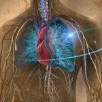 لماذا مرض السرطان لا يصيب القلب ؟
