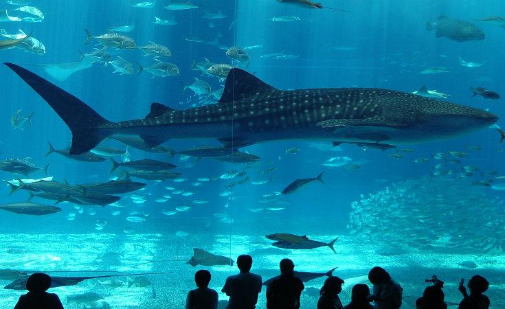 أكواريوم اسطنبول (Istanbul Aquarium)