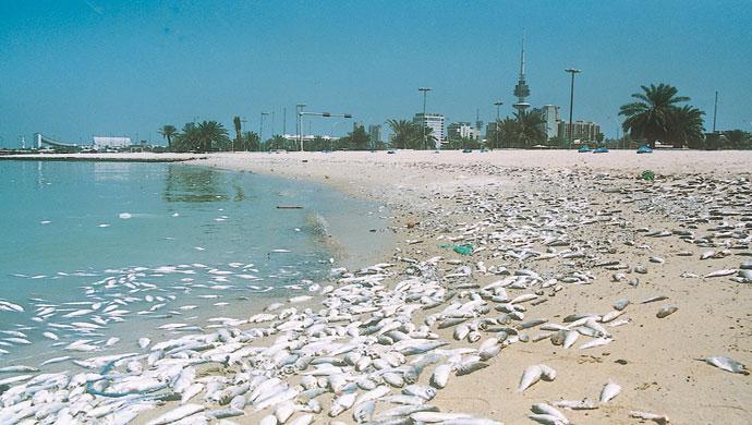 الآثار الضارة للأمطار الحمضية على البيئة البحرية