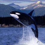 ماهو اكبر حيوان على كوكب الأرض ؟