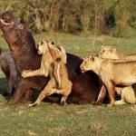 ما هو أشرس حيوان في العالم ؟